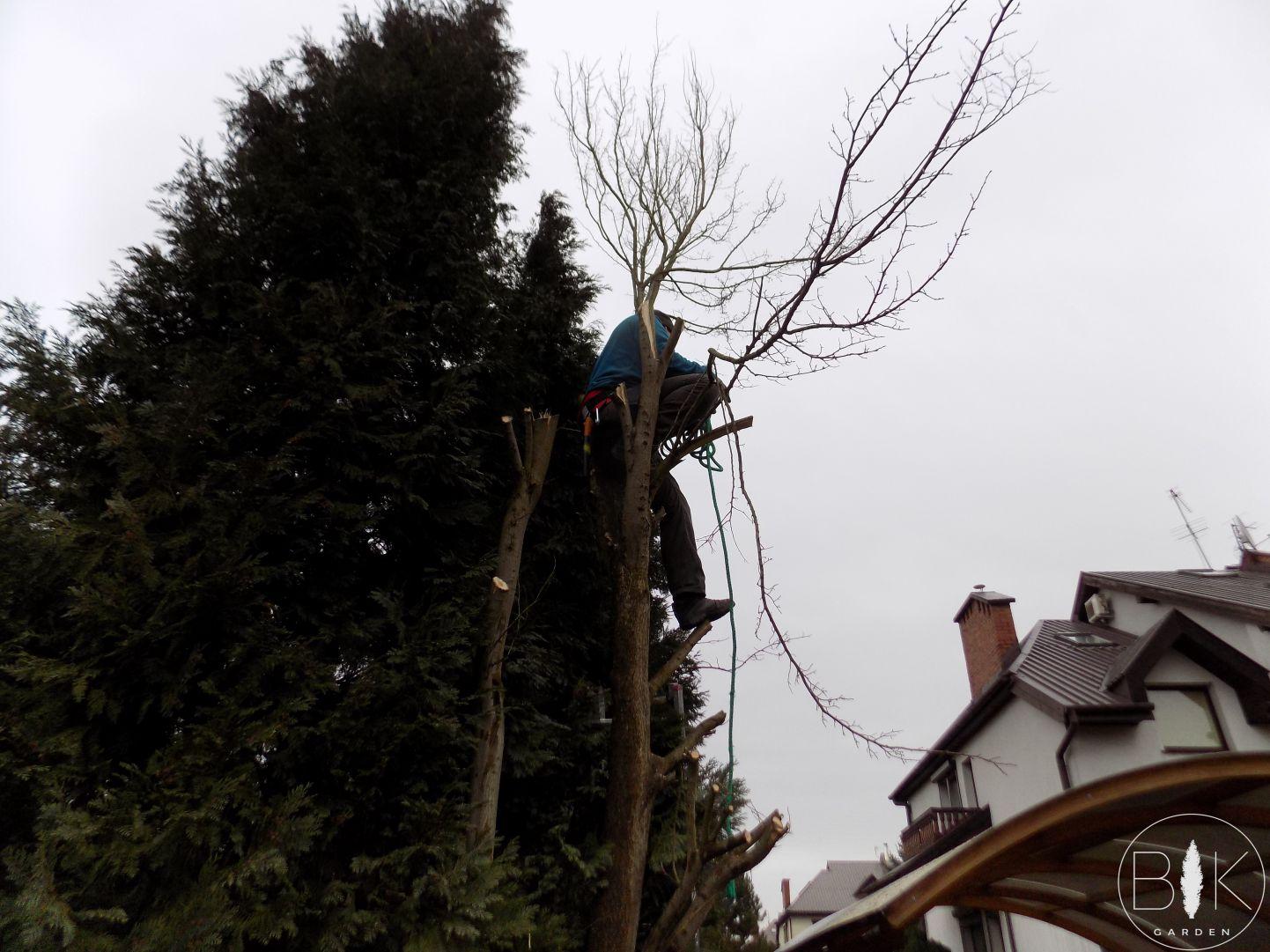 Alpinistyczne przycinanie drzew