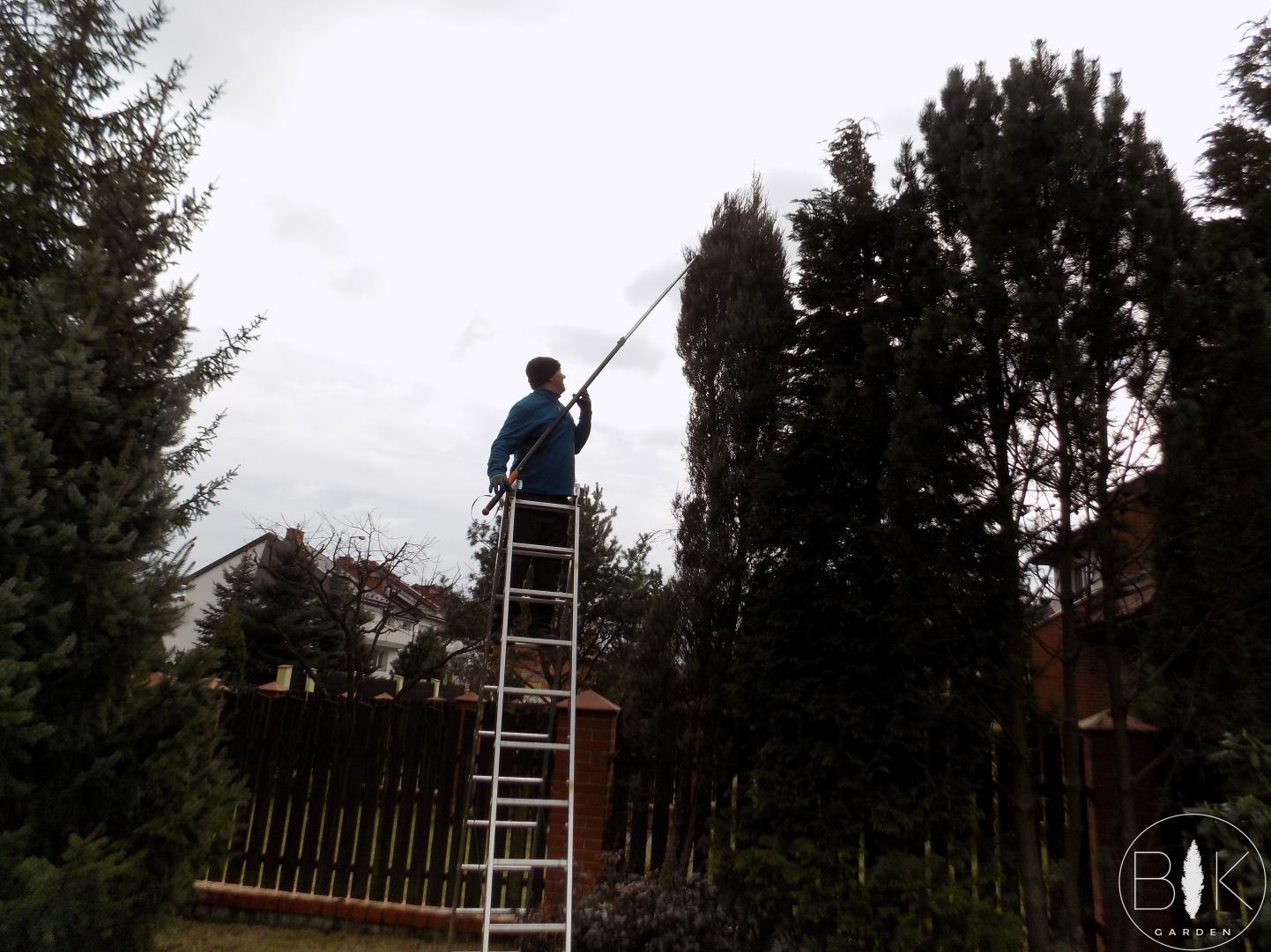 Przycinanie wysokich drzew