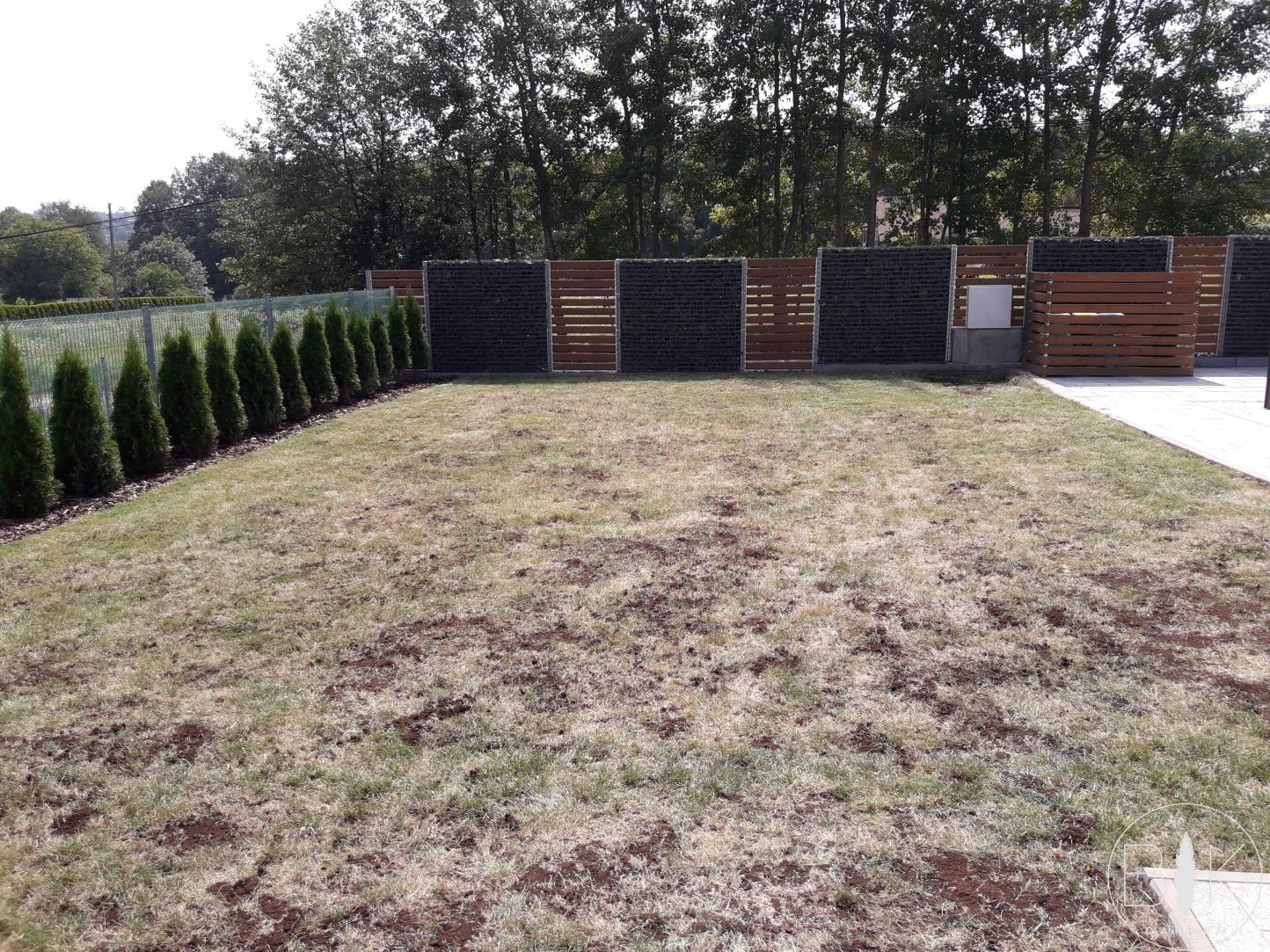 dosiew trawnika + przykrycie nasion torfem