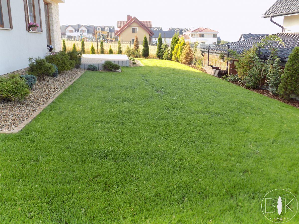 nowy trawnik wysiewany