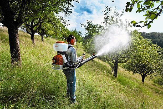 opryskiwanie drzew owocowych