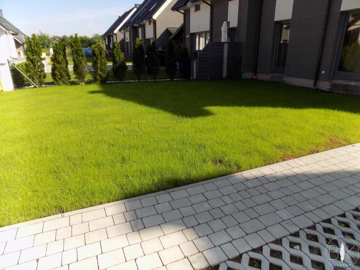 trawnik wysiewany zaraz po wzejsciu