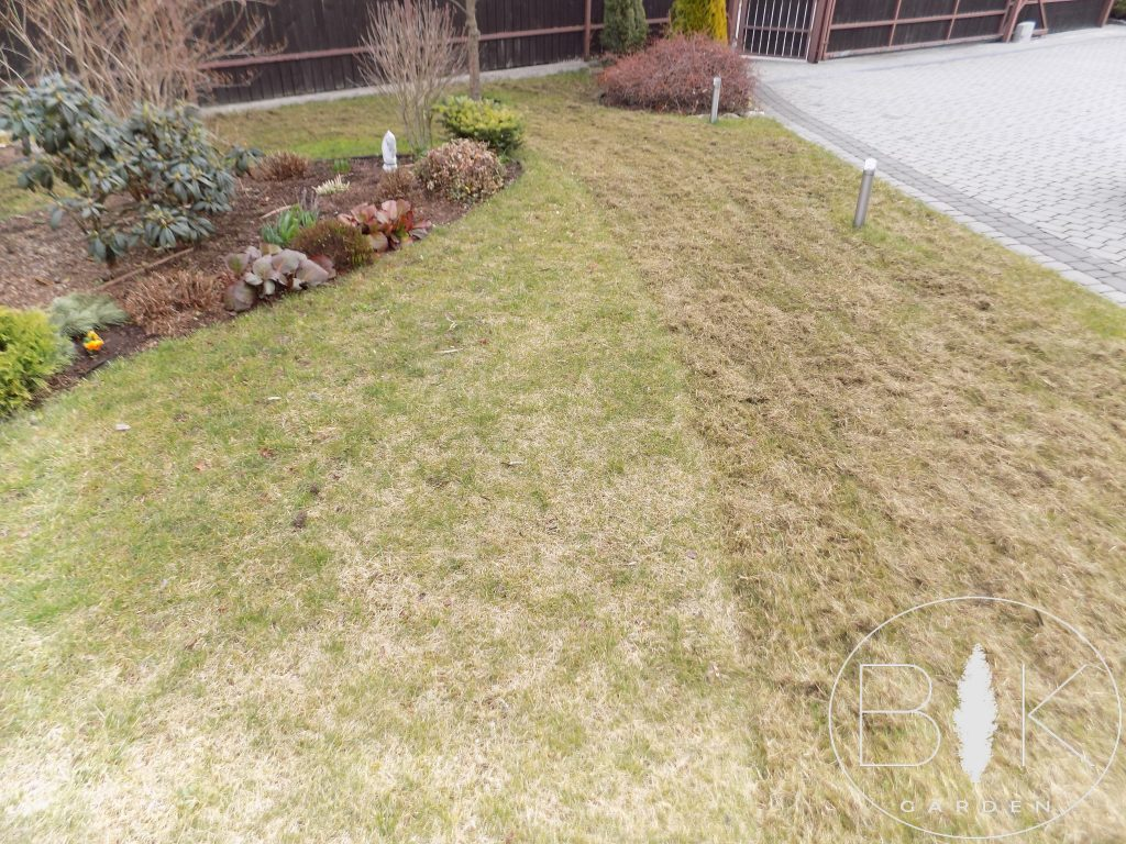 Trawnik po wertykulacji
