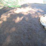 Trawnik z siewu 5