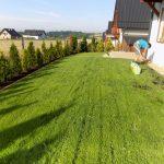 Dosiewki trawnika z siewu