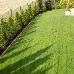gęsty trawnik z siewu